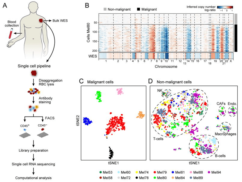 Dissection of melanoma with single-cell RNA-seq.
